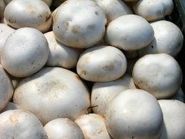 In Che tipi di luoghi Do funghi crescono nel bosco?