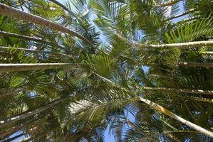 Più rapida crescita Palma