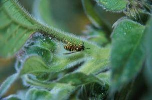 Vespe e foglie delle piante