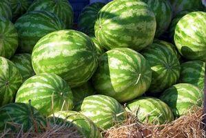 Come si coltivano meloni senza semi?