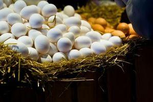 Gusci d'uovo nel suolo