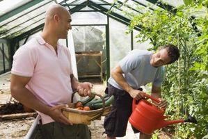 Misure per tenere Wilting contro idroponica di pomodori