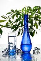 Usi di acqua minerale per le piante