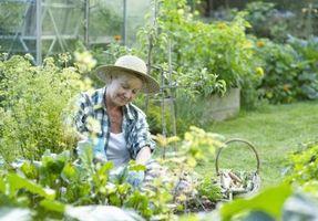 Più economici di fiori e verdure Seeds
