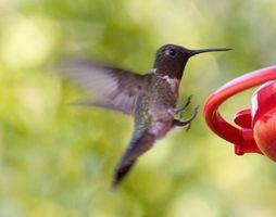 Come costruire un piedistallo Hummingbird Bird Bath