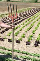 Suggerimenti per irrigazione Orti