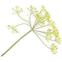 C'è una possibilità che il mio Erbe Saranno Impollinare con altre piante?