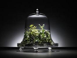 Come coltivare una pianta grassa senza semi