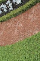 Macchie marroni sulla bosso Arbusti