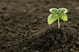Come Allentare duro terreno argilloso per un giardino