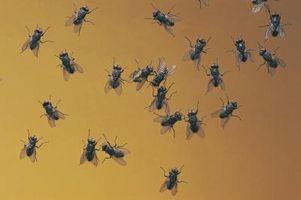 Bugs e termiti nella Casa