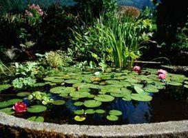 Homemade fontana dello stagno