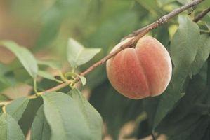 Macchie nere sulla frutta Tree Leaves