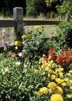 Trasporto di Minerali in piante da fiore