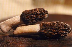 Morel funghi coltivazione