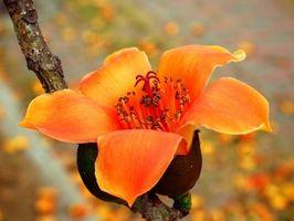 Come creare Disposizioni seta floreali