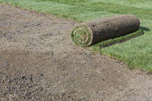 Quanto Topsoil è necessario per crescere erba buona?