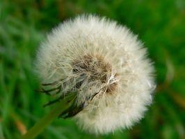Perché è il glifosato inappropriato per le piante?