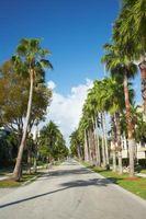 Florida Fungo su alberi