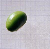 Come produrre i migliori semi di soia