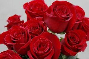 Le rose migliori gambo lungo