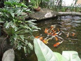 Come pulire i filtri Pond