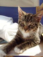 Come rimuovere Cat Paw stampe dai mobili