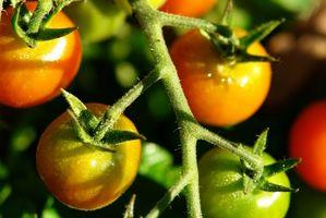 Fertilizzante naturale per le piante di pomodoro