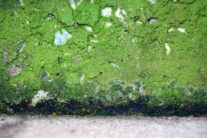 Come rimuovere la muffa verde dal cemento