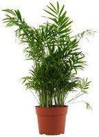 Come prendersi cura di bambù nel suolo