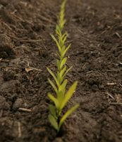 Elenco dei comuni fertilizzanti agricoli