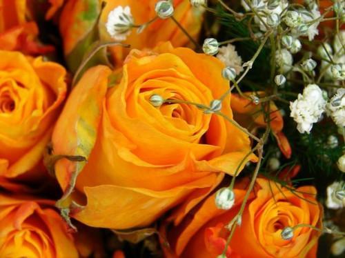 Come potare rose a stelo lungo