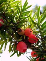 Quando è la stagione migliore per crescere un albero?