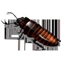 Come uccidere scarafaggi in Walls
