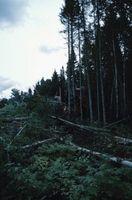 Come tagliare gli alberi in un angolo ripido