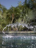 Gli effetti sull'uomo da alghe nelle piscine