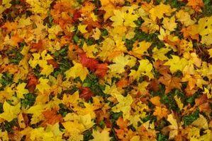 Come pulire Leaf Marks Da Cemento