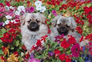 Che Impianto Trellis Non è velenoso per i cani?