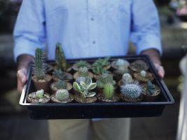 Come appendere piante grasse