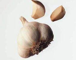Come coltivare aglio a casa