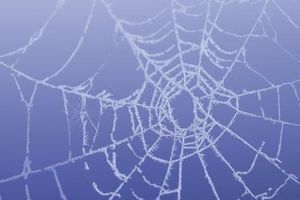 Come dipingere le pareti con il web Effetto Spider