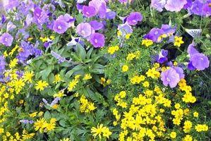 Come scegliere le piante per un pieno di Sun Garden Bed