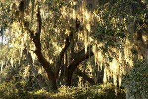 Problemi tronco d'albero di salice