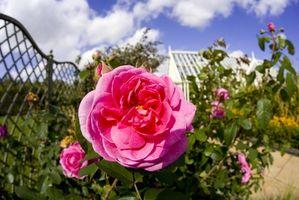 I primi Piante Spring Garden