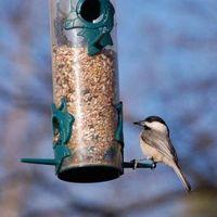 Come pulire un alimentatore esterno Uccello