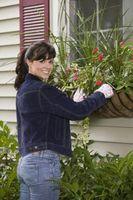 Come proteggere una finestra in ferro battuto di sicurezza per una casa