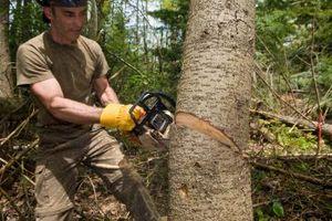 Come tagliare piccoli alberi con una sega a catena