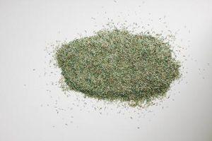 E 'meglio iniziare i semi nel suolo o in asciugamani di carta?