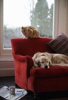 Come rimuovere un odore da cuscini del divano