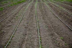I Componenti del terreno: Materia organica